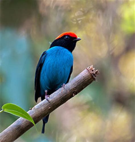 climate change s surprising effect shrinking climate change and animals tropical birds