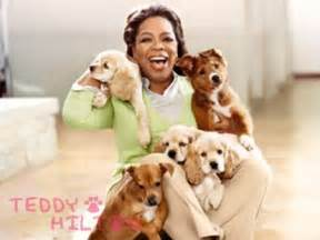 oprah s dogs oprah s doggies are family teddyhilton
