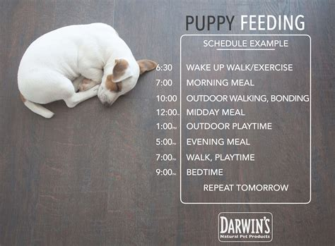 puppy schedule feeding chart breeds picture