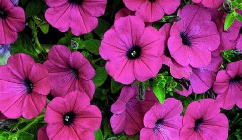 popular spring flowers top 5 spring flowers for philadelphia philadelphia