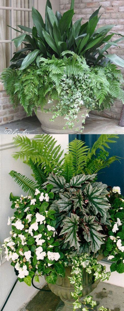1000 ideas about container flowers on pinterest container plants potted plants patio and