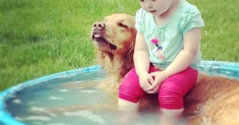 Animal Kiddie Pool Merah a pool with seating 11 made me laugh animal and baby dogs