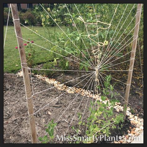 Creative Trellis creative string trellises miss smarty plants