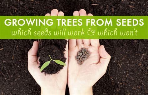 growing trees  seeds  seeds work   won
