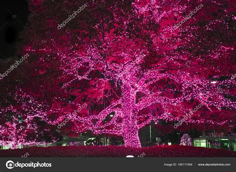 whats the best way tohang lights on a tree vertical or horizonatal len licht boom decoratieve buiten string lichten opknoping boom tuin stockfoto