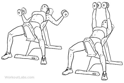 chest fly bench incline bench dumbbell fly chest pinterest incline bench chest workouts and workout