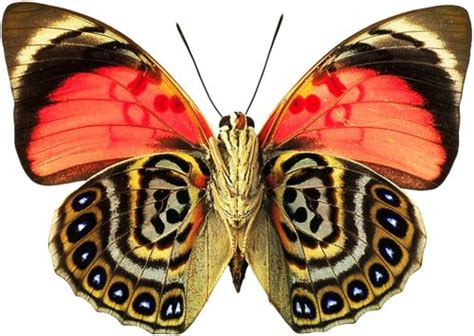 patterns in nature butterflies butterfly enjoy the beauty of the richness of colors and