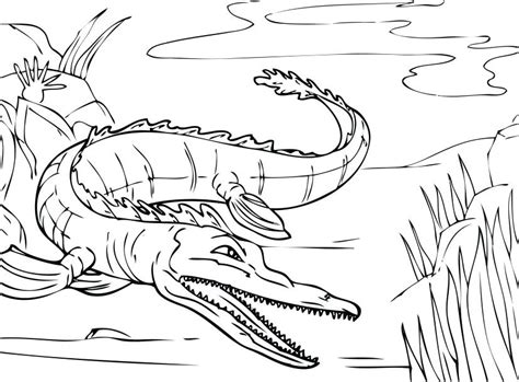 Alligator Coloring Sheets by Alligator Coloring Pages Alligator Coloring Sheets