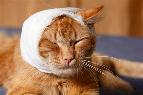 craniotomy  cats procedure efficacy recovery