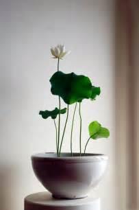 How To Grow A Lotus Flower Indoors Une Vraie Oasis Chez Vous Gr 226 Ce Aux Plantes D Int 233 Rieur