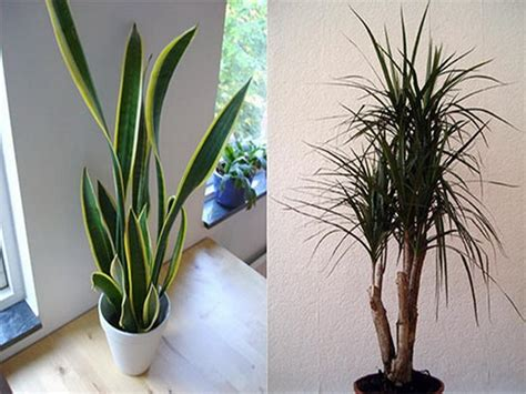 Good Indoor Plants | bloombety good and best indoor plants good indoor plants