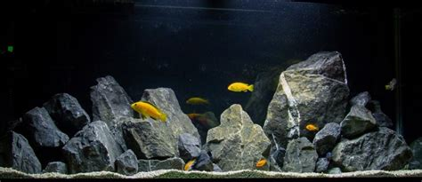 aquascaping african cichlid aquarium natural african cichlid aquarium with limestone rock african cichlids pinterest