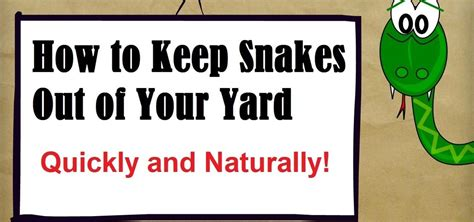 what to keep how to keep snakes out of your yard 171 housekeeping