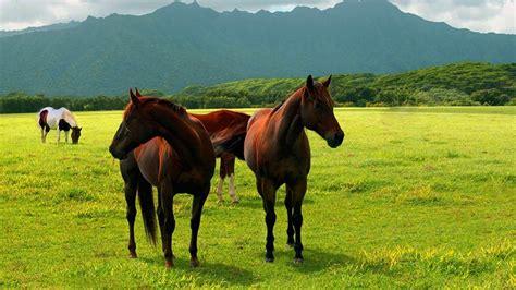 imagenes de paisajes y caballos fondo pantalla prado y caballos