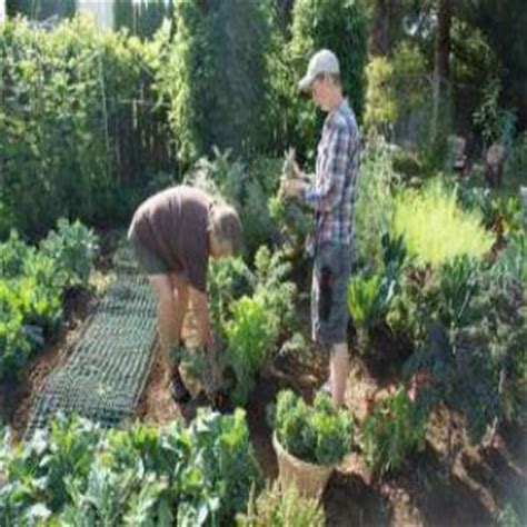 backyard farmer magazine your backyard farmer transforms yards into organic csas part 2 organic gardening