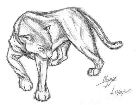 sketch panther by h brid on deviantart