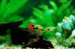 Freshwater Fish   Freshwater Aquarium Talk