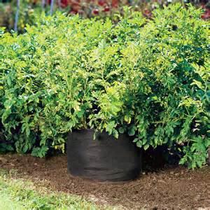 Gardening Potatoes Potato Bin Grow Your Own Potatoes No Garden Required