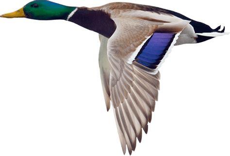Half Bath Shower boise duck goose amp turkey hunts rivers edge hunting club