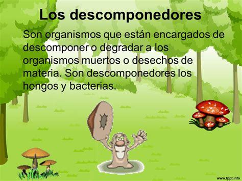 cadena alimenticia hongos y bacterias cadena alimentaria ppt video online descargar