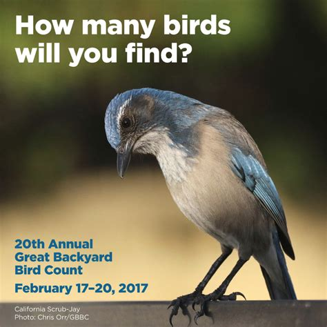 great american backyard bird count beepeeking blog