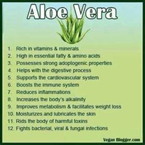 aloe vera facts 1000 images about aloe vera on pinterest aloe vera