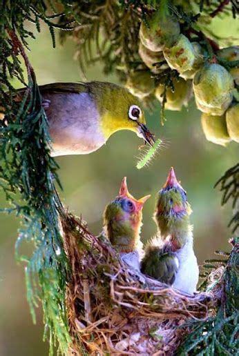 1000 ideas about wild birds on pinterest wild bird