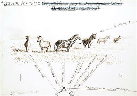 zebra pattern evolution animal zebras and giraffes mostly vintage printable
