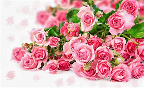 wallpaper bunga rose hitam gambar rangkaian bunga mawar merah muda daunbuah com