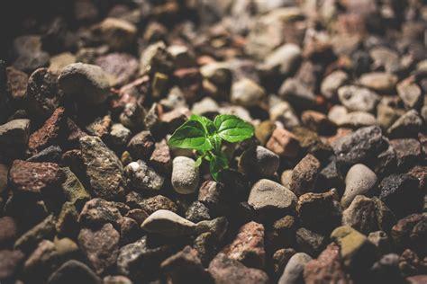 plant growing between the rocks freestocks org