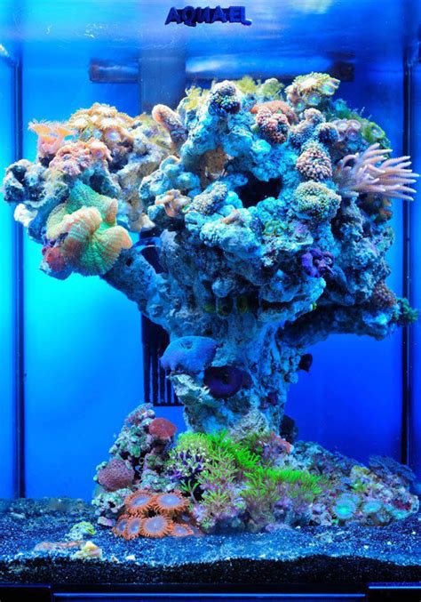 5 To Lust After by 5 Reef Aquariums To Lust After Blue Planet Aquarium