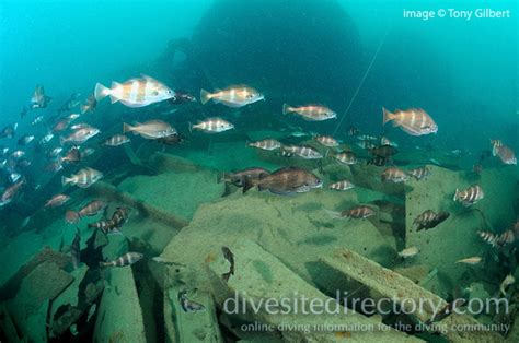 persier scuba diving plymouth europe dive