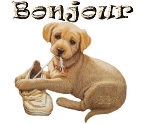 b01io48y42 un anniversaire au poil gifs chiens le blog de lemondedesgifs over blog