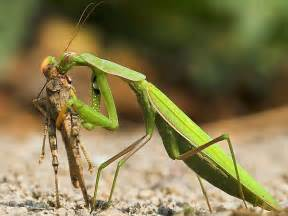 Garden Insect Pests - northern virginia garden insects know your insect friends surrounds landscape architecture