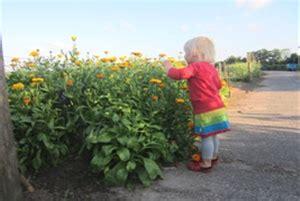 high tea bloemen plukken theetuin bij pluktuin pluktuin stoutenburg kidsproof