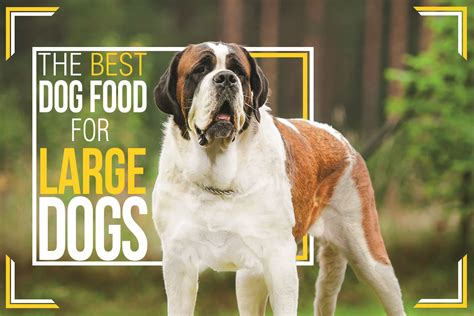best food for large breeds best food for large dogs large breed food uk