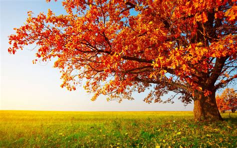 wallpaper hd desktop autumn autumn hd widescreen wallpaper wallpapersafari