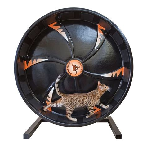exercise wheel cat exercise wheel