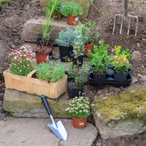 Plants For A Rock Garden Zone 5 Rock Gardens Suitable Rock Garden Plants For Zone 5 Gardens