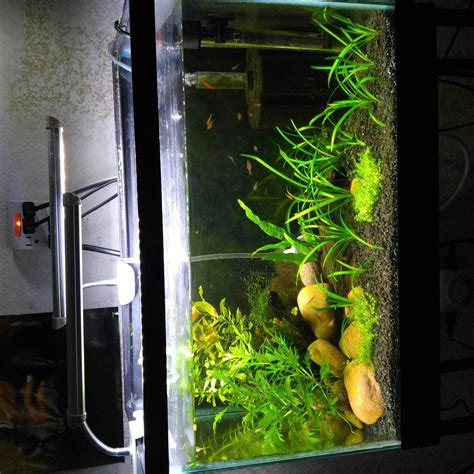 10 gallon planted tank led lighting the planted tank forum view single post led lighting