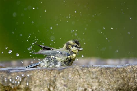 new autumnwatch blog feed your feathered garden