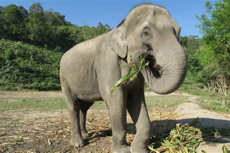 Gajah India gambar margasatwa kebun binatang binatang menyusui