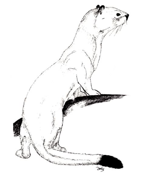 free coloring pages of ermine