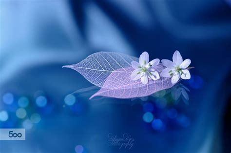 lafugue logos photography lafugue logos sets lafugue style fall in love with flowers