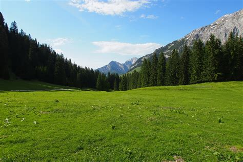 alpine meadow background by austriaangloalliance on deviantart
