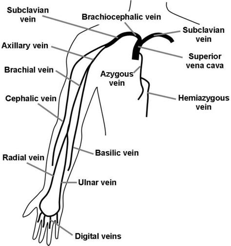 arm veins diagram talk about nursing acls pals cpr and more