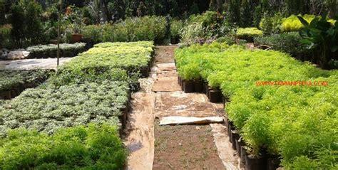 teks prosedur membuat tanaman hias jual tanaman hias online tukang tanaman hias murah