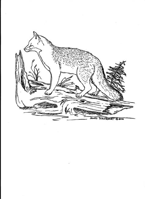 coloring page gray fox grey fox coloring page color grey gray silver