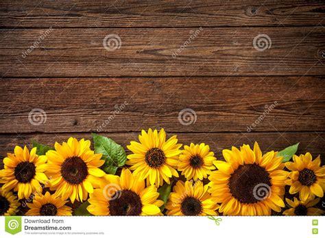sunflowers  wooden background stock photo image
