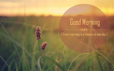 whatsapp wallpaper good morning download beautiful good morning quotes for whatsapp